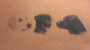The trio of labradors