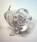 Alex Pencil