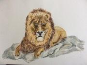 lionroc2s