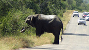 Elephant by the road