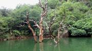 Blyde Canyon bird nest tree