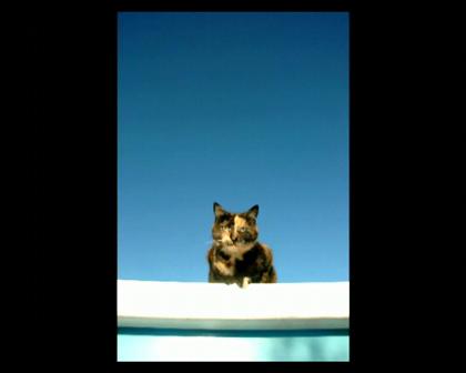 Cats Flynn