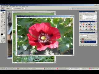 Gaussian Blur Effect on PhotoShop