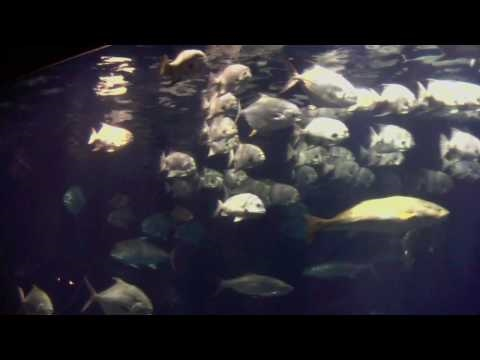 Sea Life Medley With Music: Extended Version