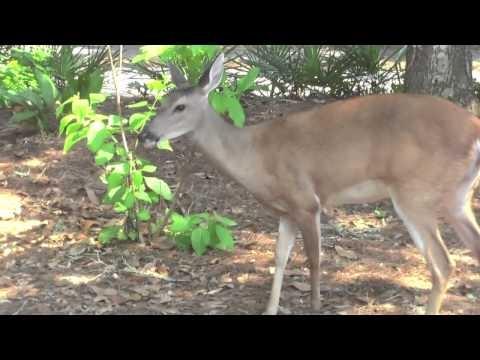 Cool Deer Encounter!