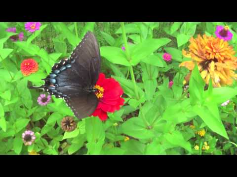 Butterflies and Flowers Set to Music