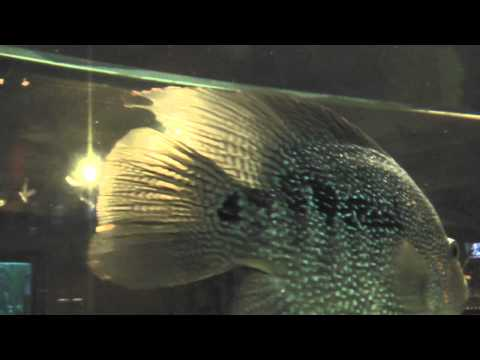 Fish in an aquarium with relaxing upbeat music