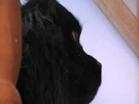 MOV027.MOD Fuzzy's Profile