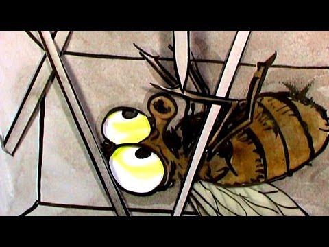 Tortures for Flies: Indian Matchbox (HD)