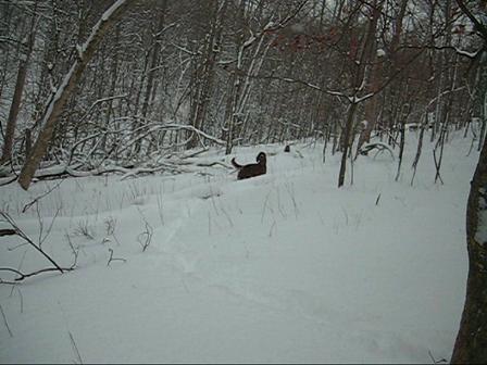 Wyatt Erp plays in the snow!
