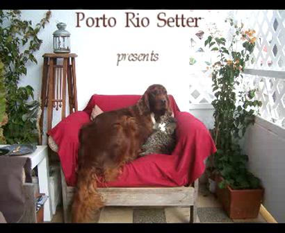 that Strange love affair in Porto Rio