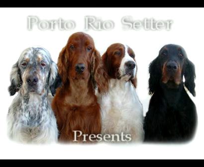 PortoRioSetter at International Dog Show of Galiza / Spain 10 05 2009