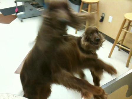 Petsmart Grooming Dog Jail Breakout