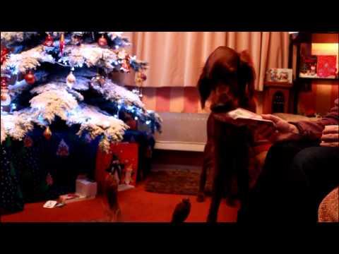 Simba & Samson Christmas 2011