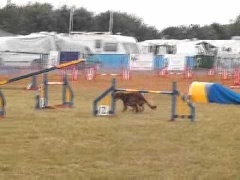 Dog Agility at Empingham