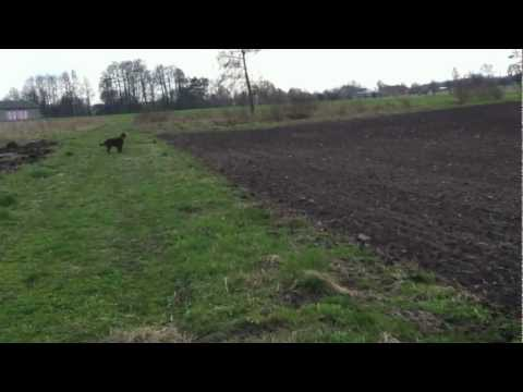 Hunting Dreaming Of You Evenflow 18 months (a pheasant was in the ditch)
