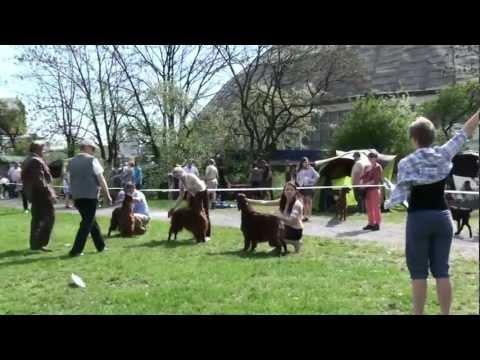 CACIB OPOLE 2012 - open class male