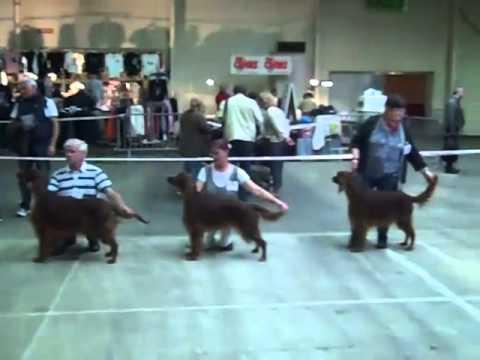 Exposition Canine Intl Mâcon 2012