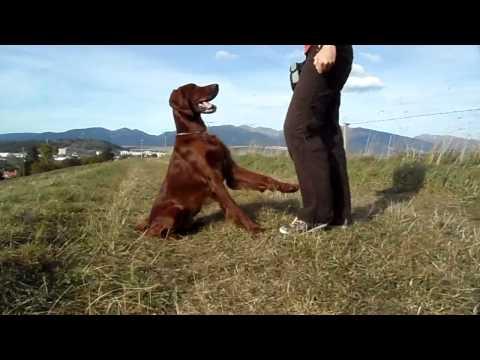 Funky life and dog trics with my irish ♥