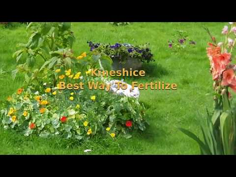 Kineshice - Best Way To Fertilize