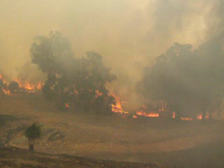 Dwellingup Fires 2007