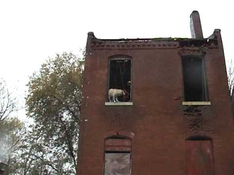 St. Louis Firefighters Rescue Dog
