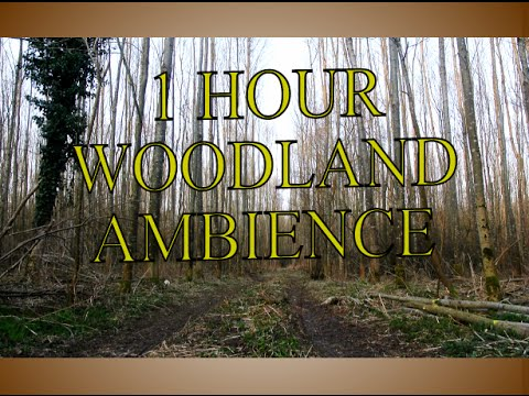 Woodland Ambience +++ 1 hour +++ bird sounds +++ for cats, kids, sleeping, studying