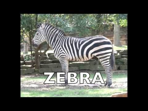 Flashcards-Animals-Long Version