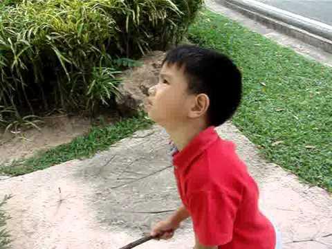 Kaow Kheaw Openzoo