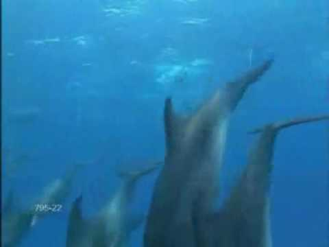 Quelli che nella prossima vita diventeranno delfini_ 12 giugno 09_ II parte