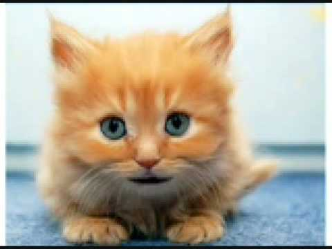cat tells all: obama spying still
