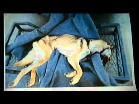 K9 Officer Gets Jail Time For Starving His Dog To Death