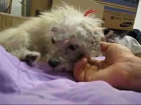 Dog Ready to Be Killed Just Wanted to Be Loved - This is Beautiful