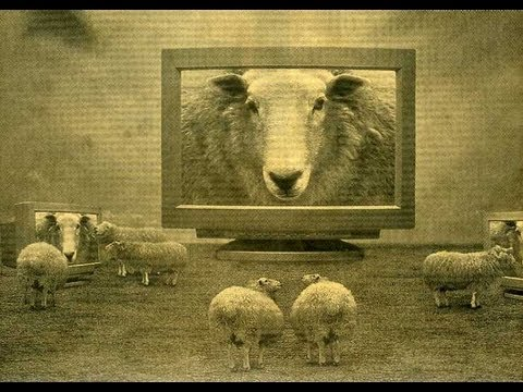 The Sheep Mentality Within the Liberty Movement