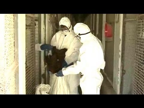 Bird flu virus changing DNA, 6000 crows dead
