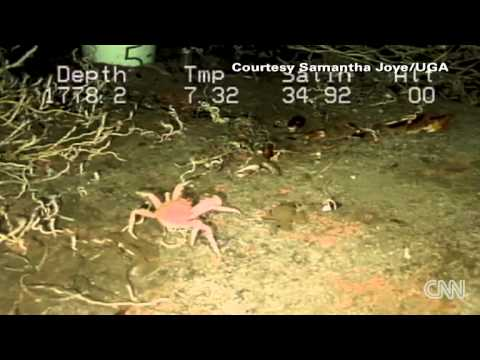 Gulf Of Mexico Seabed One Year After Oil Spill [CNN 1-19-2013]