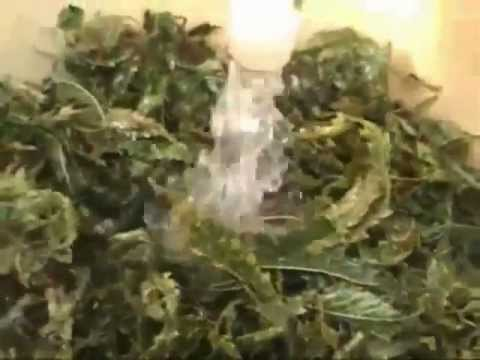 How to make Rick Simpson's Cancer Curing HempCannabis Oil (Mirror)