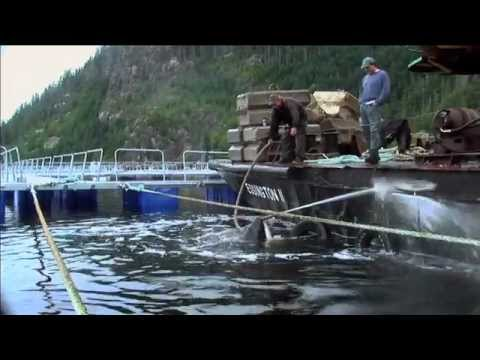The Whale (Official Trailer) - Documentary (2011)