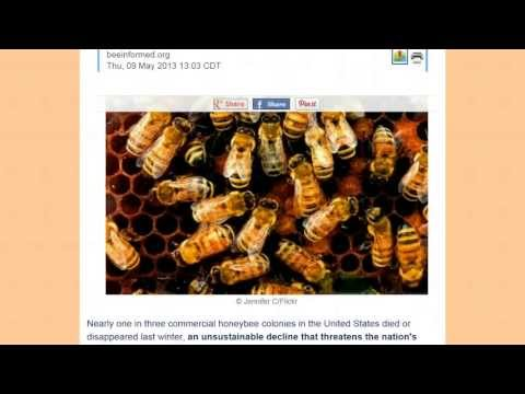 Honeybees are dying threatening food supply