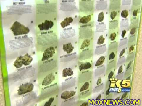BREAKING! Obama DEA Agents Raiding Medical Marijuana Dispensaries Across Washington State