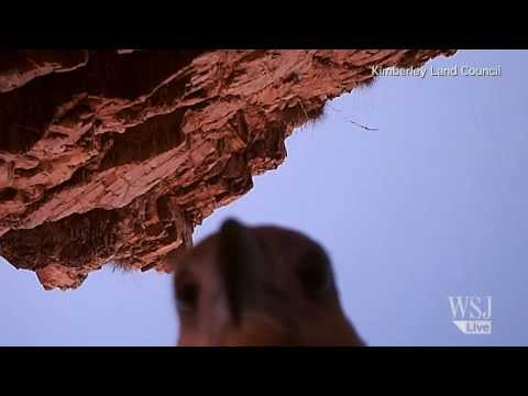 Sea Eagle Steals Camera, Takes Ultimate Selfie