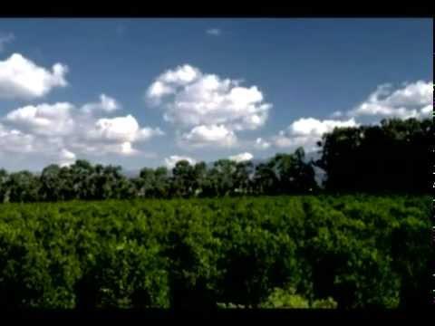 Aerosol Crimes (a.k.a. Chemtrails) 2005 Documentary