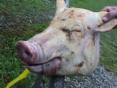 Baby Jesus Stolen, Replaced With Severed Pig's Head (Black Pork Matters!)