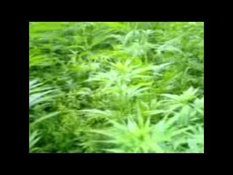 The Marijuana Conspiracy - The Truth why Hemp is illegal.