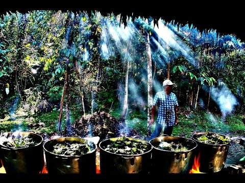 Metamorphosis- Ayahuasca Documentary