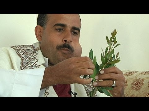 The Curse of Khat