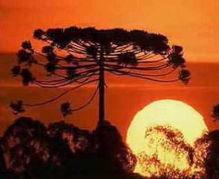 Beto Guedes - Sol De Primavera!!!