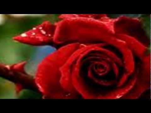 Juan Luis Guerra - Romance Rosa