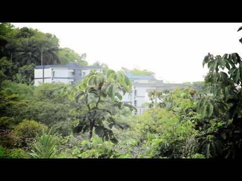 QUILOMBO RIO DO MACACO EM PERIGO