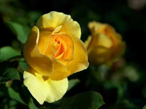 Judy Collins -  The Rose